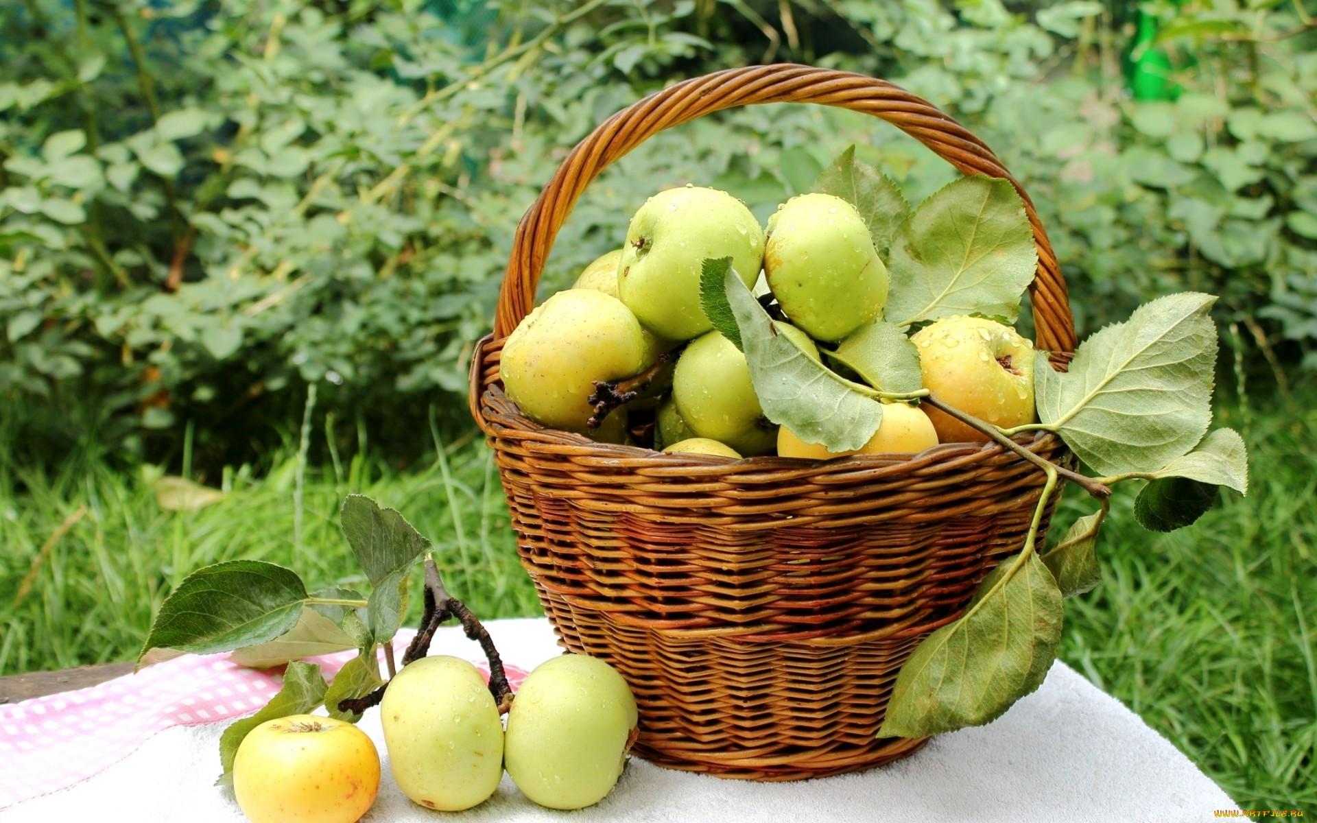 новички, задают яблоки в корзине осень фото рот теперь имеет